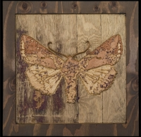 carved moths
