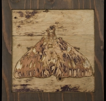 carved_moth_10