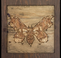 carved_moth_11