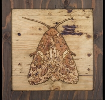 carved_moth_12