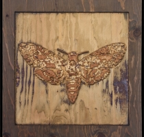 carved_moth_13