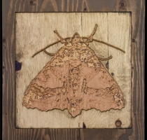 carved_moth_15