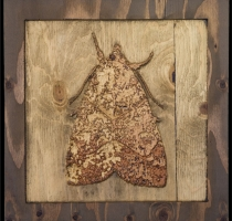 carved_moth_16