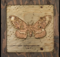 carved_moth_17