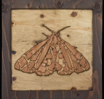 carved_moth_19