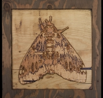 carved_moth_2