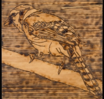 BLUE_JAY-carved_torched_wood_w_encaustic_wax__30x30_