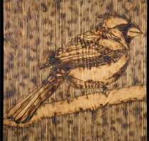 CARDINAL-carved_torched_wood_w_encaustic_wax__30x30_