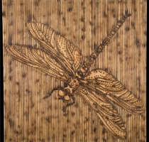 DRAGONFLY-carved_torched_wood_w_encaustic_wax__30x30_