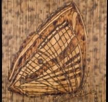 MOTH_1_panel-carved_torched_wood_w_encaustic_wax__30x30_