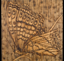 MOTH_2_panel-carved_torched_wood_w_encaustic_wax__30x30_