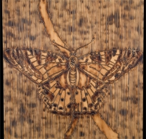 MOTH_3_panel-carved_torched_wood_w_encaustic_wax__30x30_