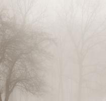 fog_7532