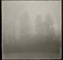 fog_7554_waxed