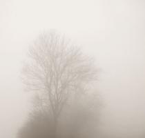 fog_7557