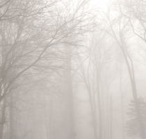 fog_7582