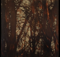 forest_landscape_1