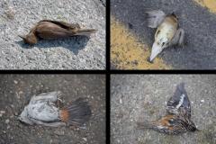 small bird roadkill quad