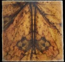moth_12_waxed