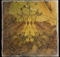 moth_13_waxed