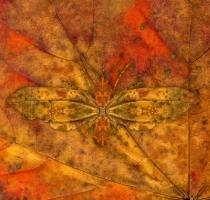 moth_19