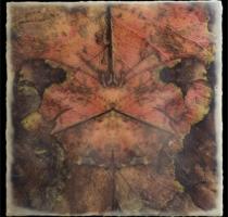 moth_1_waxed