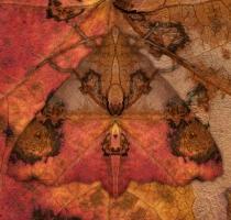moth_34_