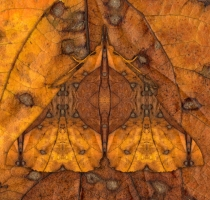 moth_41_
