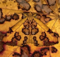 moth_43_