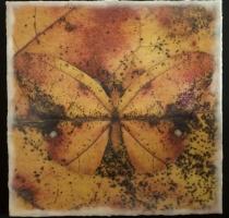 moth_4_waxed