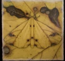 moth_7_waxed