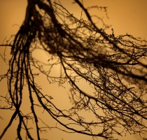 root_0987
