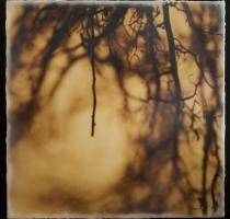 root_0991_waxed