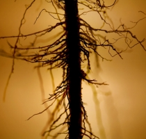 root_2517
