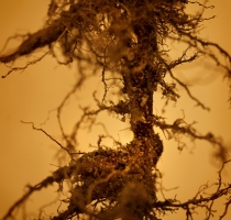 root_2578